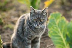 Verärgerte Katze, die aus den Grund am Kohlblatt sitzt lizenzfreies stockfoto