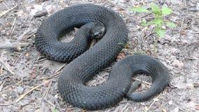 Verärgerte Schlange Stockbild