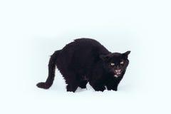 Verärgerte schwarze Katze auf einem Schnee lizenzfreies stockfoto