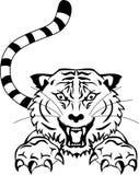 Verärgerte Tigertätowierung Stockfoto