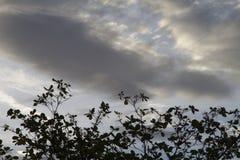 Verärgerte Wolken über Bäumen Lizenzfreie Stockfotos