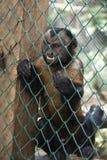 Verärgerter Affe in einem Käfig Stockfotos