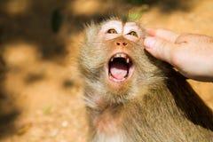 Verärgerter Affe, Thailand Lizenzfreie Stockbilder