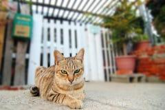 Verärgerter Blick der Katze Stockbild
