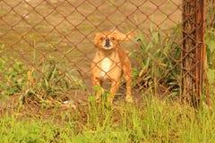 Verärgerter Hund hinter der Masche Lizenzfreie Stockbilder