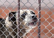 Verärgerter Hund hinter einem Zaun Stockfotografie