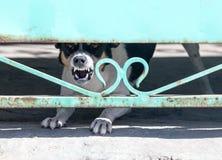 Verärgerter Hund hinter einem Zaun Lizenzfreie Stockfotografie