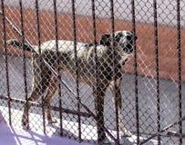 Verärgerter Hund hinter einem Zaun Stockfotos