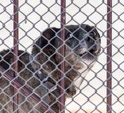 Verärgerter Hund hinter einem Zaun Lizenzfreies Stockfoto