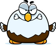 Verärgerter kleiner Weißkopfseeadler Stockbild