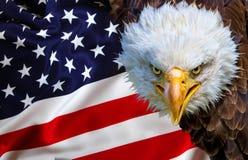 Verärgerter nordamerikanischer Weißkopfseeadler auf amerikanischer Flagge Stockbild