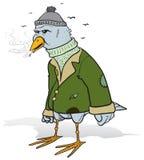 Verärgerter Vagabundvogel Lizenzfreies Stockfoto