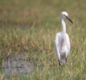 Verärgertes bird Lizenzfreies Stockfoto