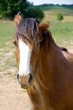 Verärgertes Pferd Stockfoto