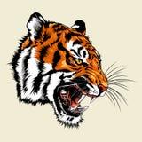 Verärgertes Tiger Kopf-Maskottchen Stockbilder