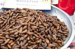 Ver à soie frit. Images stock
