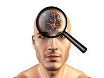 Ver as engrenagens equipa dentro a cabeça Imagens de Stock Royalty Free