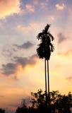 Ver de coucher du soleil de Plam Photographie stock libre de droits