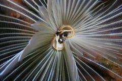 Ver de terre de chiffon de clavette Photo libre de droits