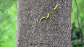 Ver jaune sur l'arbre clips vidéos