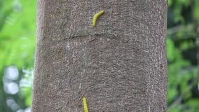 Ver jaune sur l'arbre banque de vidéos