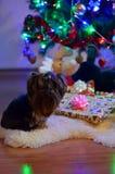 Verachtende hond royalty-vrije stock afbeelding