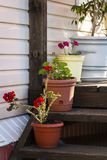 Veranda of a private house. Flowers on the veranda of a private house royalty free stock image
