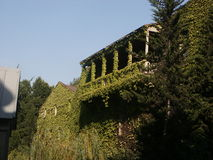 Verandah. With ivy in Tbilisi Stock Image