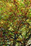 Veranderende kleuren van de herfst Stock Afbeeldingen