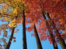 Verandering in de herfst Stock Foto's