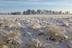 Verankern Sie mit Büscheln des Grases im Schnee Stockfotografie