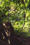 Verano Imagen de archivo