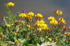 Verano Atracción refrenada de plantas en la orilla de la charca Foto de archivo