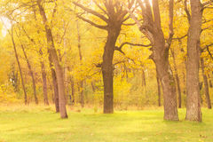 Verano Autumn Oak Forest Fotografía de archivo