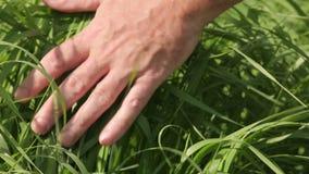 Verano conmovedor de la hierba de la mano almacen de video