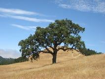 Verano de California Foto de archivo