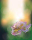 verano de la flor stock de ilustración