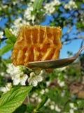 Verano de la floración de la abeja del panal de la miel Fotos de archivo libres de regalías