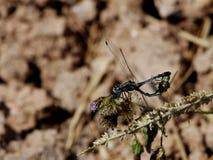 Verano de la libélula Foto de archivo libre de regalías