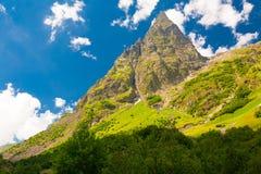 Verano de la montaña Día asoleado Bosque y prado verdes Foto de archivo