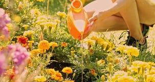 Verano de la mujer joven en los cuidados del jardín para las flores, plantas Contratan a la muchacha en la granja al establecimie almacen de video