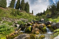 Verano de la naturaleza del agua de la corriente del arroyo del paisaje Imagen de archivo