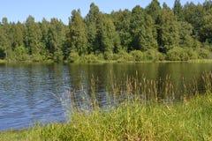 Verano de la naturaleza del paisaje del bosque del depósito del río Fotografía de archivo libre de regalías