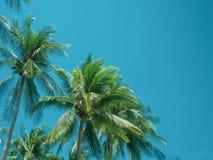Verano de la palmera del coco imagen de archivo libre de regalías