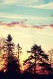 Verano de la rama de la planta de la puesta del sol Foto de archivo libre de regalías