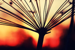 Verano de la rama de la planta de la puesta del sol Fotografía de archivo libre de regalías