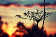 Verano de la rama de la planta de la puesta del sol Imagen de archivo