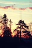 Verano de la rama de la planta de la puesta del sol Foto de archivo