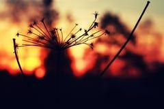 Verano de la rama de la planta de la puesta del sol Imagen de archivo libre de regalías