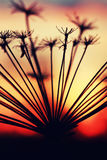 Verano de la rama de la planta de la puesta del sol Imagenes de archivo